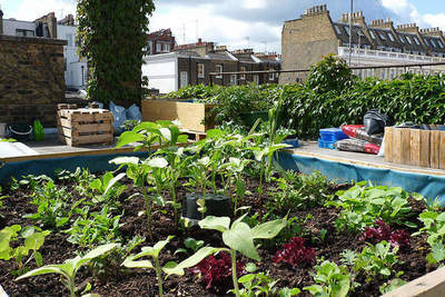 Roof Garden (7 photos) | Nature