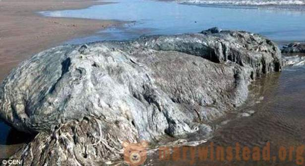 Ashore in Mexico washed up sea monster