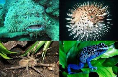 10 most poisonous animals on the planet