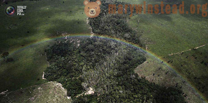 The destruction of the Amazon rain forest