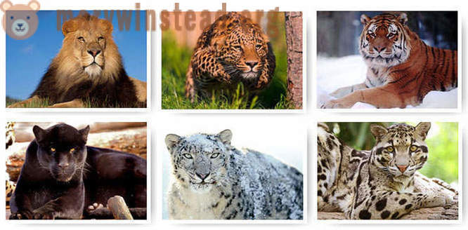 Beautiful and big cats